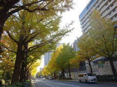 山下公園の銀杏並木はちょうど紅葉していて綺麗でした。