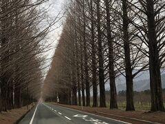 車で来るときは マキノピックランドを目的地に メタセコイア並木