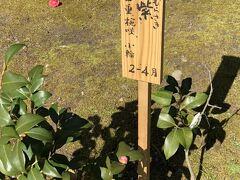 東屋の近くには、 源氏物語にちなんだ名前の椿が植えられている小道がありました。
