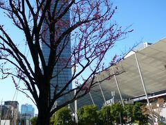 本来は・・今年初めてのフライトでしたが・・コロナのため減便を喰らってしまい 東京駅から久々?岡山に行くときは初めて?の新幹線で・・ 2月下旬ですが東京駅八重洲口では春の訪れをうかがえ桃?梅?がきれいに咲いていました 雲一つない青空に映えていました