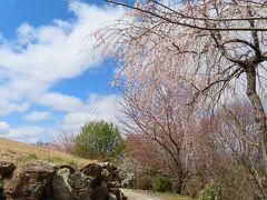 京都に到着後真っ先に行ったのは  東山山頂の  将軍塚青龍殿   とてもきれいな桜の季節  楽しみました