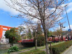 岡崎地区の周囲を巡るお堀にかかる慶流橋と  平安神宮の大鳥居と桜  車窓から 素敵なお花見