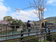 蹴上の浄水場   どこでも カメラやスマホをもって  桜を撮っている人ばかり