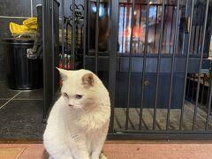 美鈴荘で出迎えてくれた猫ちゃん。
