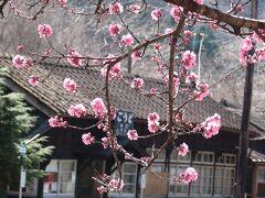 ついでに 花桃の わたらせ渓谷鐵道神戸駅