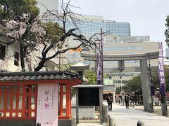 お隣は警固神社。確かここに桜の木があったはずと思って来ました。 福岡県では桜の開花宣言をしたので、どこかで、一輪でもよいから咲いている桜を見たいなあと思っていました。