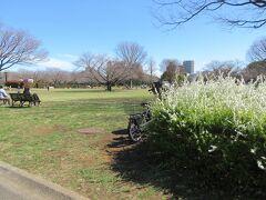木場駅から北へ5分ほど歩いたところに造られている木場公園。 河津桜は葉桜になっていましたが、コブシが満開でした。天気の良い暖かな日だったので、保育園児のグループや親子連れ、日向ぼっこする人たちが訪れていました。