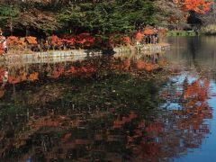 ようやくメインの池のほとりに。  紅葉のピークは1週間前だったそうで 日あたりのいい場所では 落葉がだいぶ進んでいました。  それでも青空との対比が見事です!