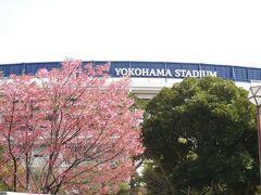 いよいよ桜の季節 駅前から 今日もハマスタはゲームあり