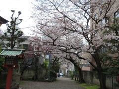 こちらは初詣で伺う秋葉神社。 桜が咲いていました。 ここでもつかの間のお花見♪
