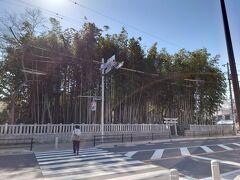 八幡で忘れてはならないのがこの場所。  千葉街道沿いにある鬱蒼とした竹藪。周りは建物が立ち並んでいて車の通りも多く、けっして人里離れた場所ではないのに、ここだけ不気味に竹藪が残されているのです。