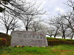 まずは荒川河川敷の小松川千本桜へ・・・ https://www.city.edogawa.tokyo.jp/e066/kuseijoho/gaiyo/shisetsuguide/bunya/koendobutsuen/senbonsakura.html