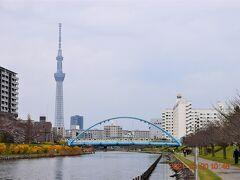 左手に東京スカイツリーが見えてきた。 旧中川は両岸とも整備されていて川に沿って歩くことができます。