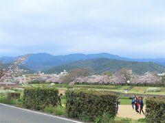 健脚な方なら  上加茂神社から京都府立植物園までの  1.7㎞を歩かれると  いいお花見ができると思います