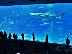 メインの大水槽「黒潮の海」です。