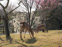 ホテルへ荷物を置いて奈良公園を巡りました。