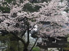 目的地の山鹿市に到着したので行ってみたかった日輪寺へ。 こちらの桜も見頃です。