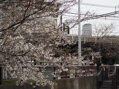 2年ぶりに中目黒の桜を見に来ました。