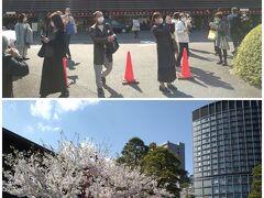 国立劇場を出るとほぼ満開の桜が目の前に。  皆さん一斉にパシャパシャ^^