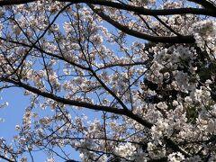 スマホの写真を整理していたら桜の画像を発見、これは息子が就職してすぐの頃、住んでいた愛宕神社近くの桜。  写真1枚でもその時の思い出がいくつも思い出せます。 この頃はリモートワークなんて考えたこともなく当時九州にいた息子は就活の為、福岡⇔東京の飛行機に何度乗ったことか・・・この春転職をするようなのですが1度も出社することなく決まったと聞いて、時代は変わったのだなあとしみじみ~(笑)変わらないのは新しい春を応援する親の気持ちくらいか(^^;