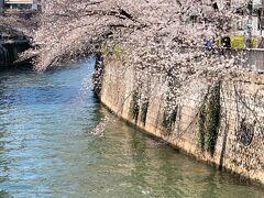 最近良く散歩をしているという目黒川の桜も満開と送られてきました。  群馬はこれから山方面へ向かって開花が進んでいくのでしょう。 見逃さず(笑)短い春を楽しもうと思います。  最後までご覧頂きありがとうございます♪
