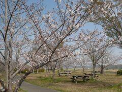 まきびさくら公園 感染症予防の為、公園内での宴会はご遠慮下さい。 満開の時にここへ訪れた旅行記はこちら https://4travel.jp/travelogue/11340145