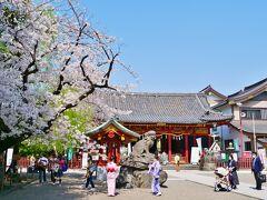 12:33 最後は浅草 浅草神社の桜もきれい