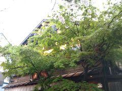 はし田屋 中目黒店 だそうです。もみじと桜、素敵だね!