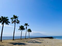 我が家から車で5分の国分海浜公園  桜はありませんが  椰子の木が南国ムード満点なので  桜島も見えて大好きな公園です
