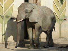 アフリカ象が好き!