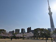 ●隅田公園  そして墨田区側の「隅田公園」の敷地の中へ。 古くより桜の名所として知られ、こちらの墨田区側に約330本、対岸の台東区側にも約600本の桜が植えられているそうで、「日本さくら名所100選」にも選定されています。