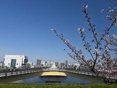 ●桜橋  ゆっくりと桜を眺めながら歩き「桜橋」へと到着。 この橋は歩行者専用橋となっており、平面のX字形をした面白い造りをしていて、橋の両端部が分かれています。  ここで橋を渡り、帰りは右岸側(浅草側)から戻っていきますが、その前にベンチでひと息つきましょう。。。