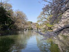 桜がほぼ咲いていました。水と桜は相性がいいです。