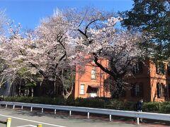東京藝術大学音楽部の桜/3月23日