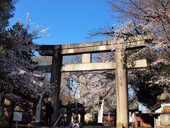 上野東照宮大石鳥居/3月23日 東京の開花宣言から9日目。お天気がいいので人がいないうちにと、朝ドラ終わってすぐに(笑)自転車で向かいました。ところが、この場所にはすでに数人が・・・ 因みにこの鳥居は国指定重要文化財になっているようです。