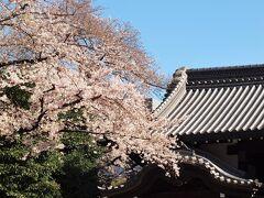 東京国立博物館・旧因州池田屋敷表門と桜/3月23日 道筋にある桜をウオッチングしながら戻ります。