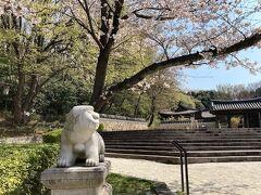 「コリア庭園」。  1990年、神奈川県と韓国・京畿道との友好提携を記念して作られた庭園で、広さは面積約5,000平方メートル、李氏朝鮮時代の地方貴族の山荘庭園をイメージした庭園です。 韓国に行かなくても韓国気分を味わえる庭園ですが、今日はパスします。 早くコロナが収束し、韓国にまた行きたいなぁ・・・。