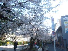 お濠と中央線の線路沿いに続く外濠公園 桜並木が続くスポットです