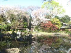 昨秋にも来た神池庭園も桜が咲いています
