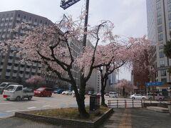 久屋大通駅まで歩いて、先日も撮影した桜です。今日は天気がいいのでよりきれいです。