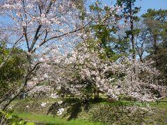 本殿へ向かう祓橋を渡ると桜が咲いていてきれいでした。 この先に三の鳥居がある松の馬場がですが、環境保護のため、鳥居は通ることができず、左右の道を歩きます。