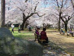 「さくら名所100選の地」にも選ばれています。 埼玉県では他に長瀞の桜も選定されています。