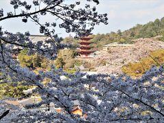 桜と五重塔は誰が撮っても絵になる
