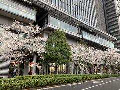 さくらテラス 2階には桜とお堀が見れるレストランが数軒 ここも並んでいました