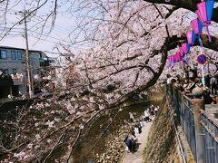 桜橋から、大岡川を下って行きます。