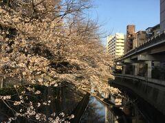 3月23日、テレワークも一段落。ちょっと家の近くの江戸川公園へ