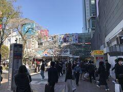 渋谷駅のハチ公前にも桜の木