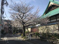 桜坂を観た後は江戸時代の農業用水を再現した「六郷用水」沿いの桜並木を進み