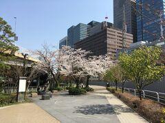 こちらは27日神田橋近くの桜です