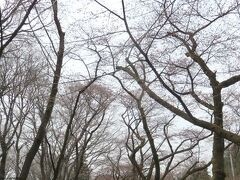 そういえばこの時期に桜みたよねって事で行ってみたけれど まだ早かった様で咲いていなかった。  「赤城南面千本桜」